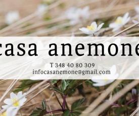 Casanemone